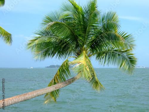 Photo  Palm