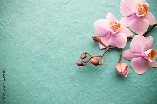 Fototapety, obrazy: Orchid.