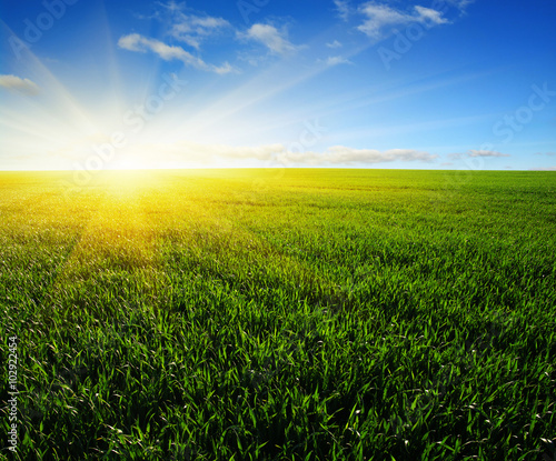 field and sun
