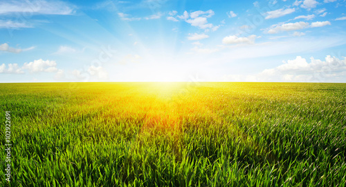 Canvas Prints Village field and sun