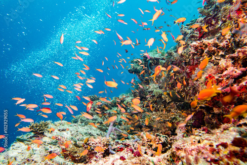 Tuinposter Koraalriffen diving in colorful reef underwater
