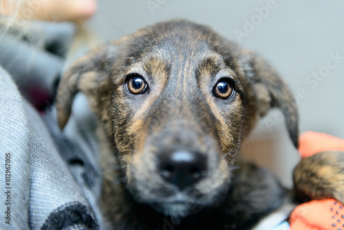 Photo homeless puppy in shelter