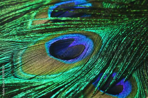 Foto op Aluminium Pauw Closeup of peacock feathers