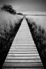 Fototapeta Wetland Walkway - Scotland