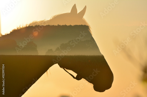 Photo  Beautiful sunrise inside horse in art, multiexposition