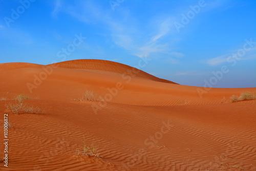 Foto op Aluminium Koraal Arabian desert. United Arab Emirates.