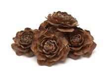 Gathered Kindling - Cedar Cone Tops