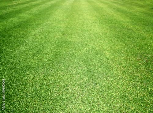 Fotografía Golf Courses green lawn