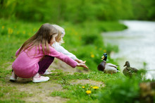 Two Adorable Sisters Feeding Ducks By A River