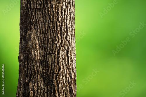 Fotografija  Tree Trunk Closeup isolated