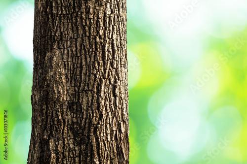 Fotografie, Obraz  tree trunk closeup