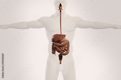 Human anatomy xray view of digestive system, showing stomach, colon ...