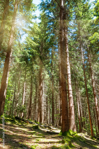 Poster de jardin Parc Naturel Beautiful morning scene in the forest with sun rays