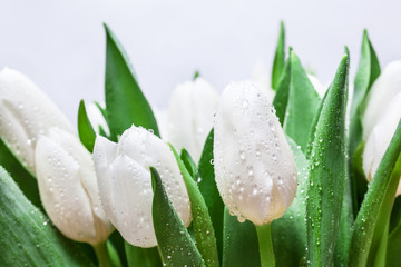 Fresh white tulip bouquet with water drops close-up on white background. Spring
