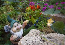 Funny Garden Gnome In The Colors