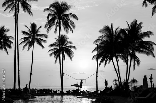 Valokuva Silhouettes of palm trees on a tropical beach, black and white photography