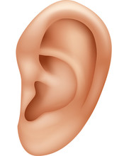 Illustration Of Ear Human Isol...