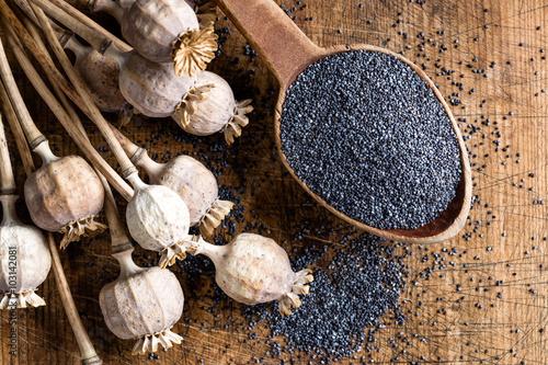Cadres-photo bureau Poppy poppy seeds