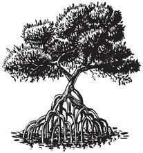 Mangrove Tree Ink Style Vector...