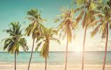 Kokosowy drzewko palmowe na nadmorski plaży przy lato sezonem - 103149874