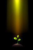 Pile of dirt and growing plant under shining light beams