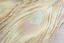 Albino Peacock Feathers Background