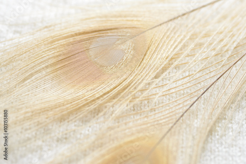 Fotografie, Obraz  Albino peacock feathers background
