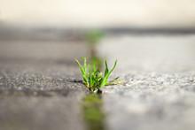 Grass On Road Cracks