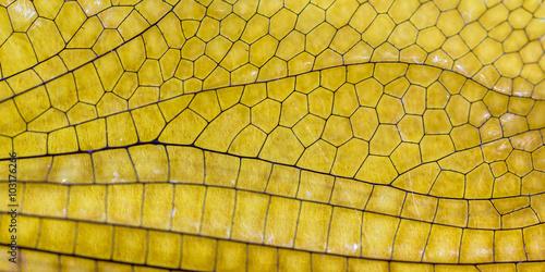Fotografie, Obraz  Textura de asa de libélula.