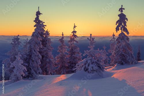 Foto op Aluminium Aubergine landscape