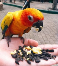Bird Eating From Hand