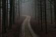 canvas print picture - Einsamer Waldweg im Morgennebel