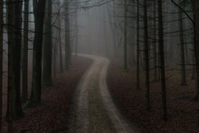Einsamer Waldweg Im Morgennebel