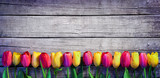 Fototapeta Tulipany - Tulips in a row on the Vintage Plank - Spring Background