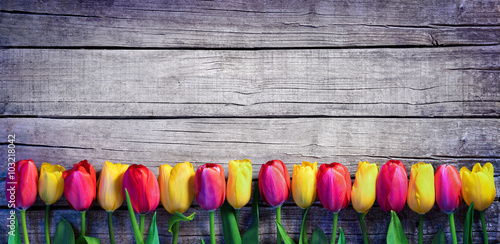 Tuinposter Tulp Tulips in a row on the Vintage Plank - Spring Background