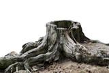 Old weathered tree stump - 103219245