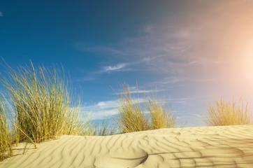 Panel Szklanyjuncos sobre una duna de arena