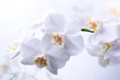 canvas print picture - Ramo de orquídea