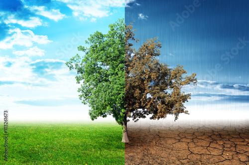 dwie-strony-drzewa
