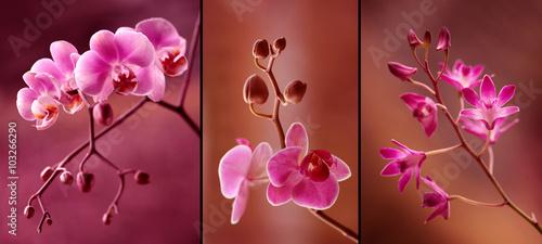 Obraz Orchidea tryptyk w fioletach - fototapety do salonu