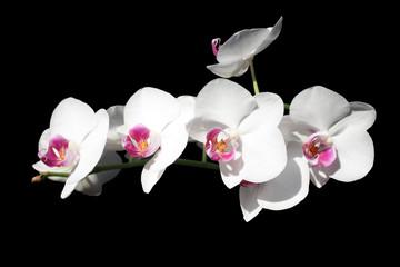 Obraz na Szkle Orchid flower