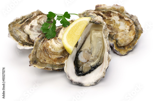 Poster Coquillage fresh oysters isolated on white background