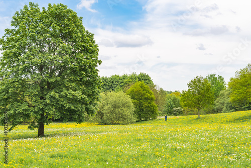 Fototapety, obrazy: Blooming dandelion on green meadow in springtime