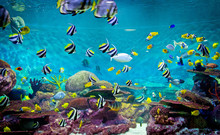 Fishes And Coral, Underwater L...