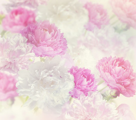 Obraz na PlexiPeony Flowers Background