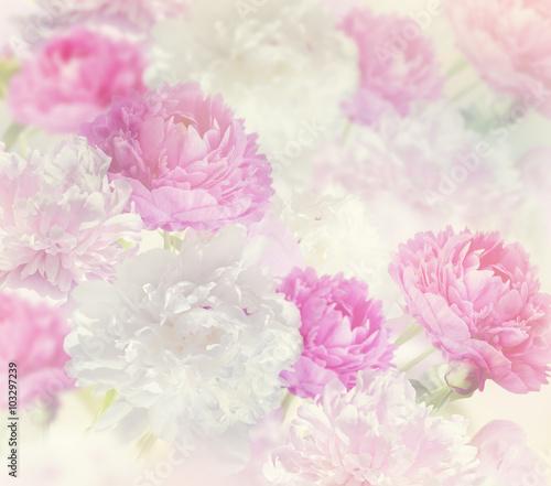 Peony Flowers Background - 103297239