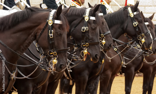 Photo  The Queen's Life Guard or Horse Guard participate in the changing ceremony in Lo