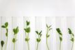 Leinwandbild Motiv 沢山の試験管の中で培養される植物イメージ