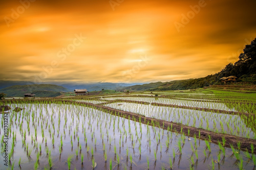 Terraced paddy field in Mae Chaem village Chaing mai Thailand