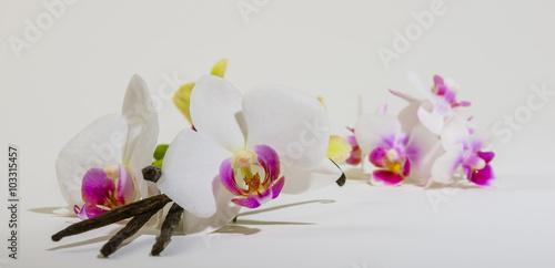 Foto auf Gartenposter Orchideen Vanille